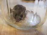 2010-08-09 mouse 007