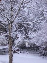 2011-02-24 snow 017